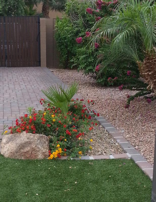 Plants trees e l m landscaping design inc for Landscaping rock queen creek az